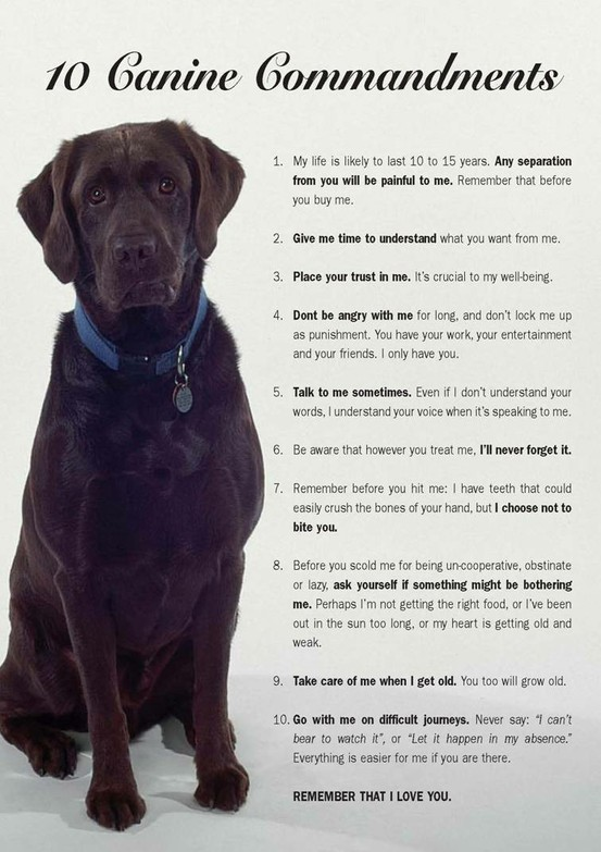 Canine 10 commandments