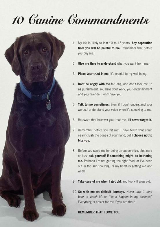 Canine 10 commandments