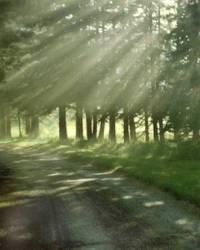 Peaceful_path